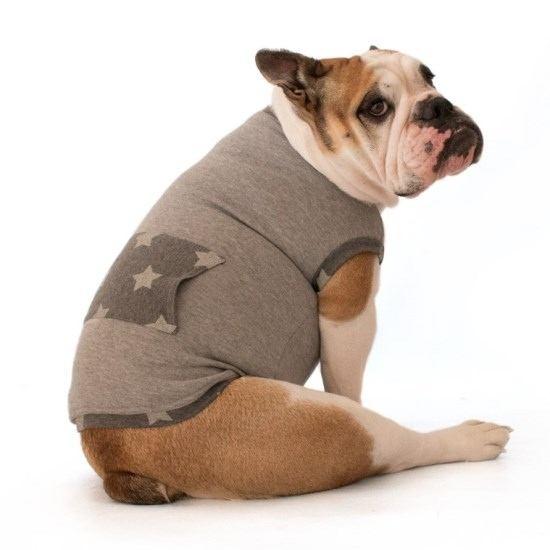 Abbigliamento per cani vendita online | Gallerani Store