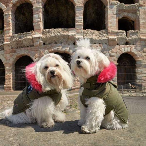 Praga cappotto imbottito per cani - Camon