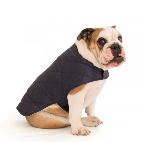 Mantellina Cooler per Bulldog Inglese colore Navy Blue