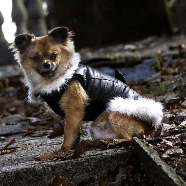 Foxy Lady Giubbotto per cani - Collezione Croci