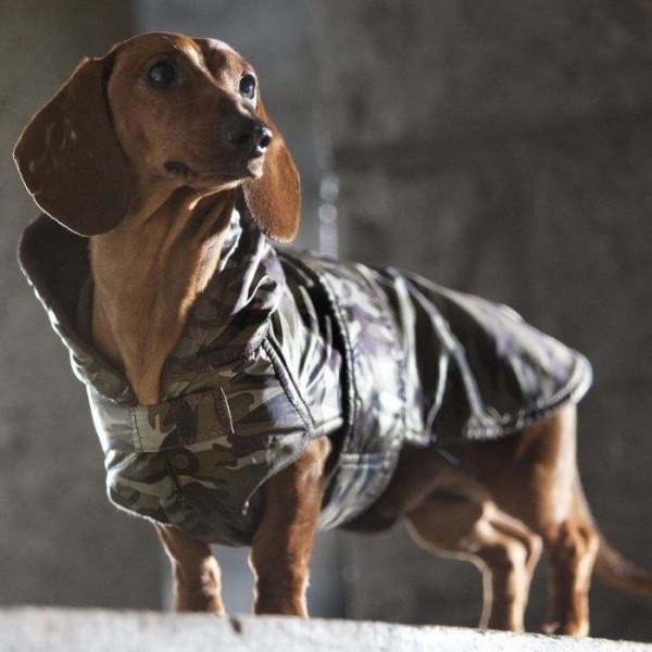 """Giubbotto per cane Bassotto """"Dachshund Military"""" - Collezione Croci"""