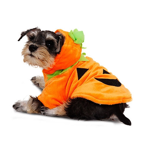 Costume Zucca di Halloween per cani