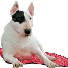 Tappeto refrigerante RED WESTERN per cani - AQUA COOLKEEPER