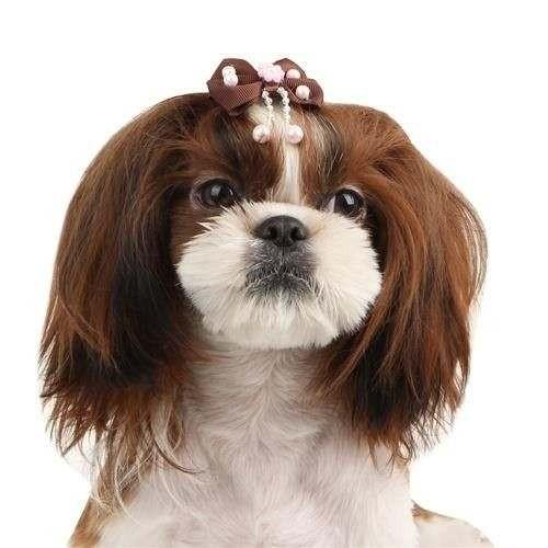 Fiocchetto con fermaglio Sally marrone per cani - Pinkaholic New York