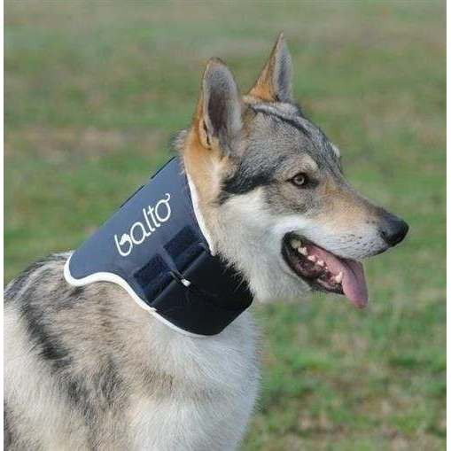 Collare rigido ortopedico BT Neck per cani - Balto