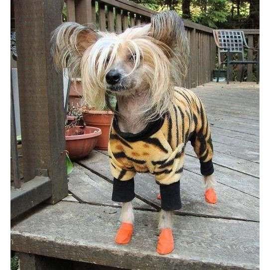 Scarpine PAWZ in gomma naturale per cani - Misura XS ARANCIONE