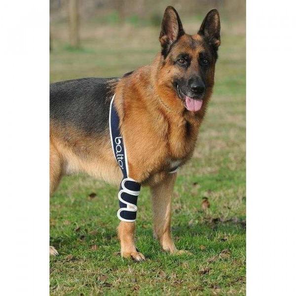 Tutore del gomito destro ortopedico BT SOFT per cani - Balto