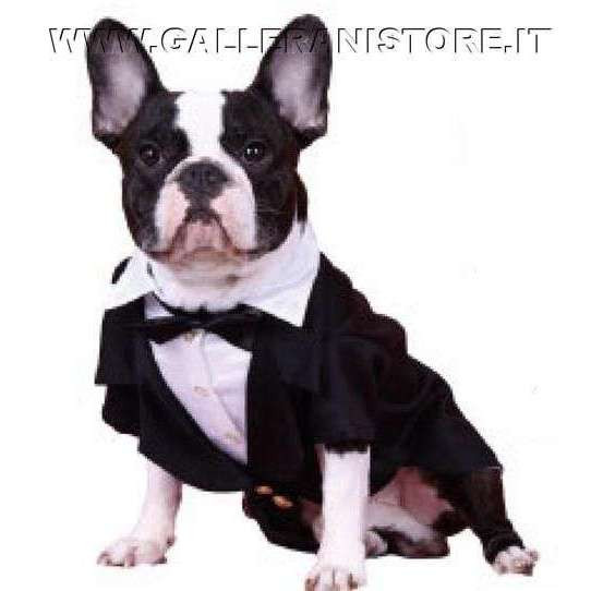 Smoking per Carlino e Bulldog Francese Black Tuxedo MM