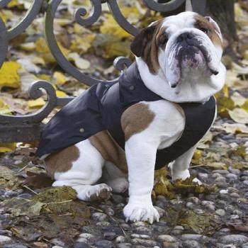 Black Giubbotto specifico per Bulldog - Collezione Croci