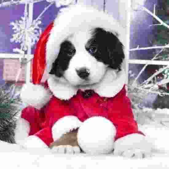 Abbigliamento di Natale per cani