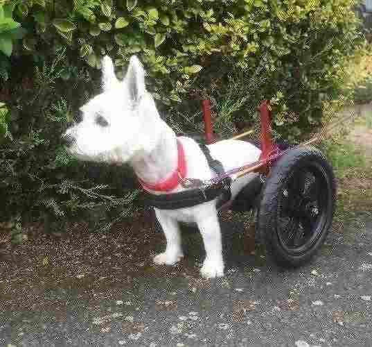 Carrello ortopedico per cani 4