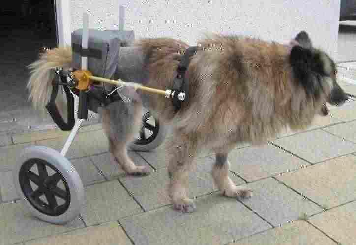 Carrello ortopedico per cani 3