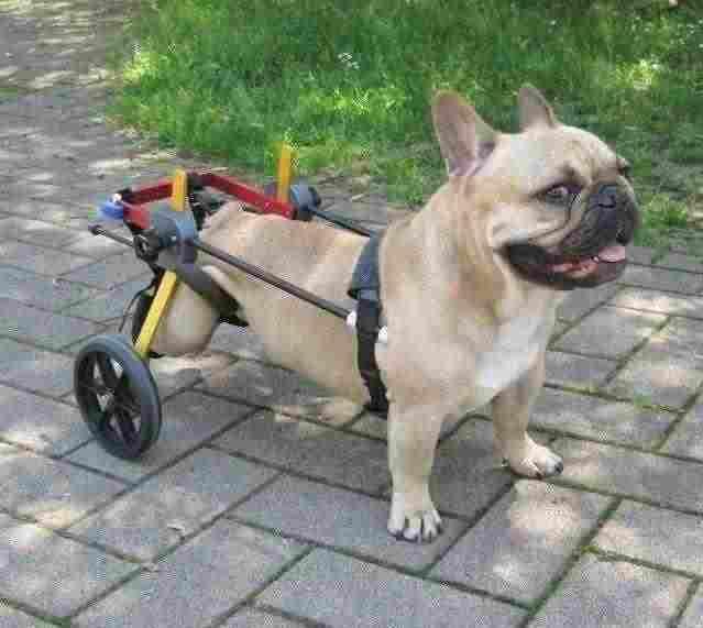 Carrello ortopedico per cani 1